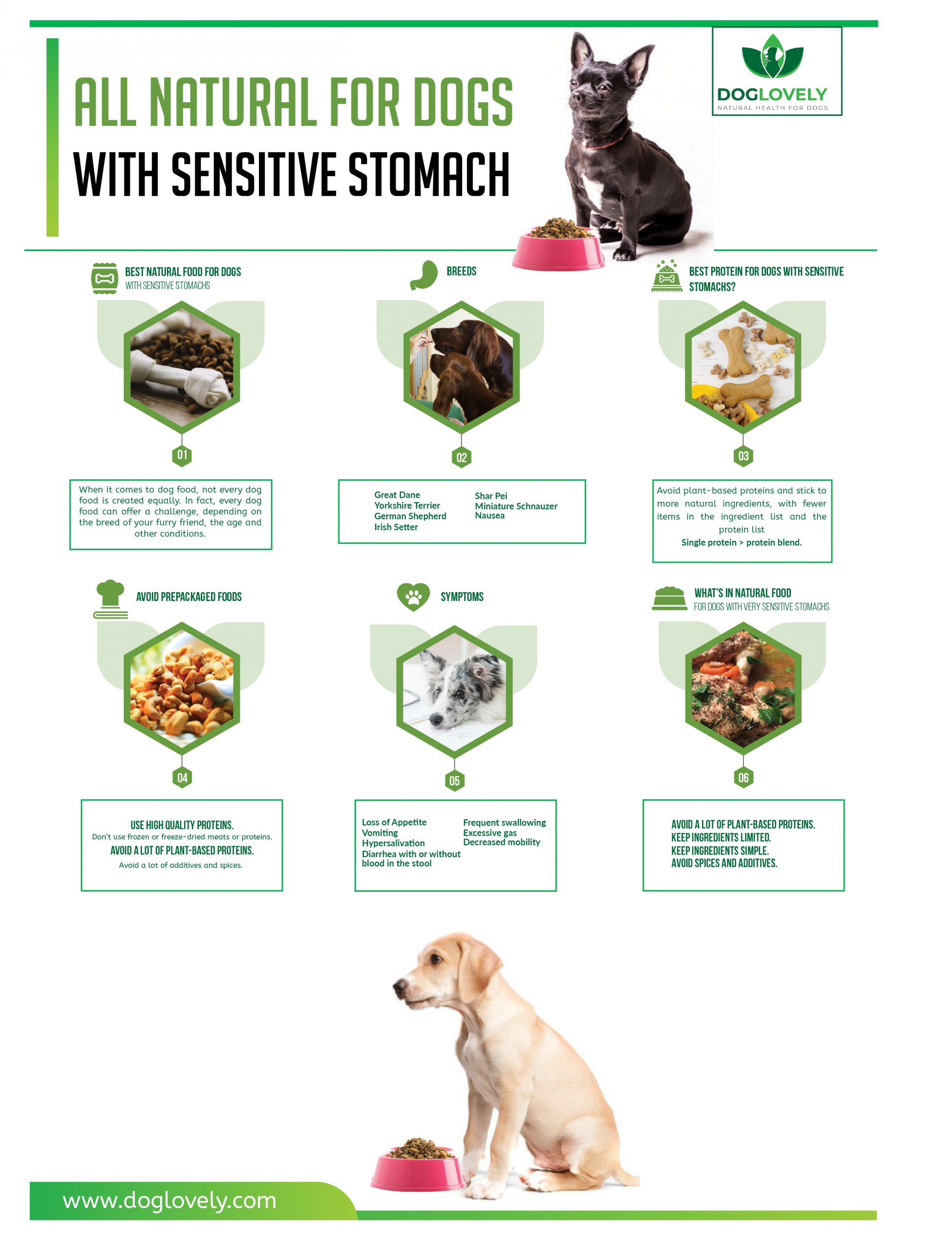 infographic for dogs with sensitive stomach