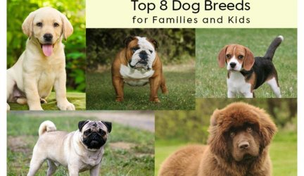 Top 8 Dog Breeds for Families and Kids