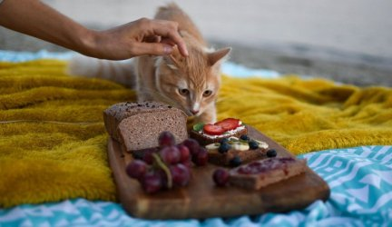 What Food is Best for your Cat: Dry or Canned?