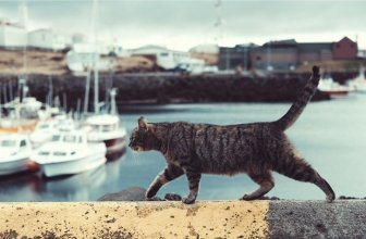 How to Travel with Your Cat: A Stress-Free Guide