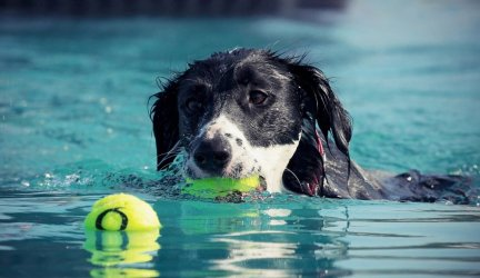 Best Exercises for Adult Dogs