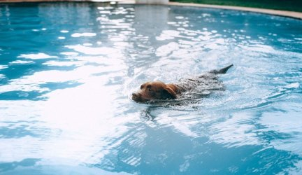 Can All Dogs Swim? Things to Keep in Mind