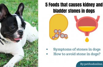 5 Foods That Causes Kidney and Bladder Stones in Dogs