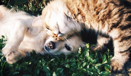 Effects of Catnip: Is Catnip Good For Cats and Dogs?