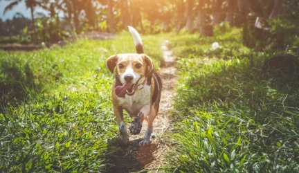 Best Organic Dog Food Brands Of 2019 – In The USA