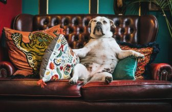 The Best (Worst) Couches for Pet Owners