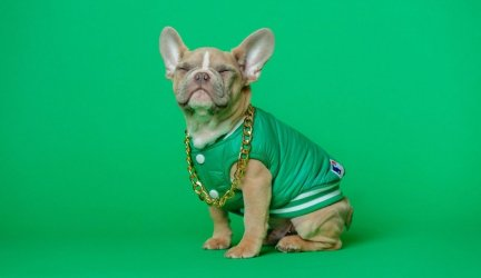 Top 10 Designer Apparel and Accessory Brands for Pets