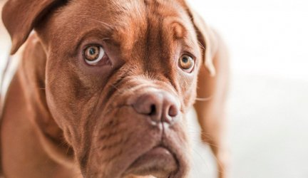 Top Mistakes to Avoid for Dogs with a Sensitive Stomach