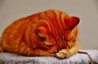 Urinary Crystals in Cats: Causes and Symptoms